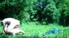 Une libertine se fait empaler le fion en forêt - Anal Amateur Public